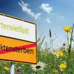 Titelbild Projekt Grüngitter
